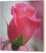 Pink Rosebud 1 Wood Print
