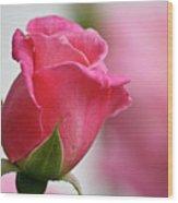 Pink Rosebud 3 Wood Print