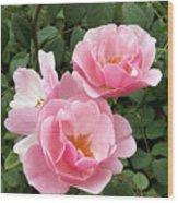 Pink Roses 1 Wood Print