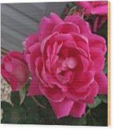Pink Roses 2 Wood Print