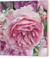 Pink Roses Wood Print by Frank Tschakert