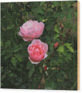 Pink Roses In A Garden Wood Print