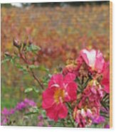 Pink Roses In Fall Wood Print