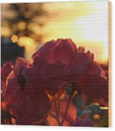Pink Roses Sunset Wood Print