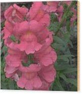 Pink Snapdragons Wood Print