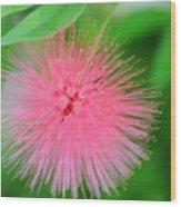 Pink Spikes Wood Print
