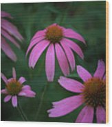 Pink Spray Wood Print