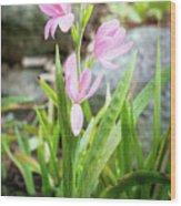 Pink Spring Bulb Wood Print