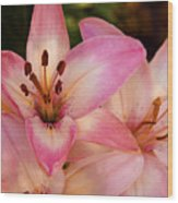 Pink Spring Lilly Wood Print