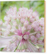 Pink Summer Wood Print