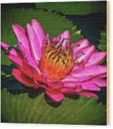 Pink Summer Water Lily Wood Print