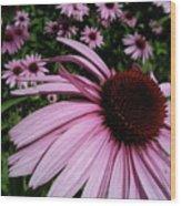 Pink Sweetie Wood Print