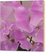 Pink Sweetpeas Wood Print