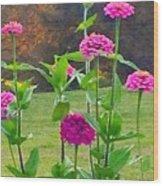 Pink Tall Zinnia's Wood Print