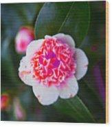 Pink Tenderness Wood Print