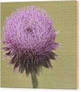 Pink Thistle Wood Print