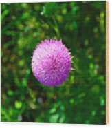 Pink Thistle Study 2 Wood Print