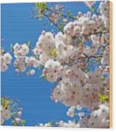 Pink Tree Blossoms Art Prints 55 Spring Flowers Blue Sky Landscape  Wood Print