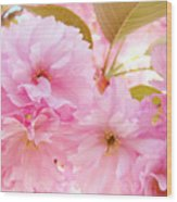 Pink Tree Blossoms Art Prints Spring Blossoms Baslee Troutman Wood Print