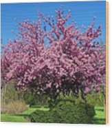 Pink Tree Wood Print