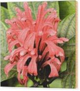Pink Trendles Wood Print