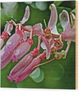 Pink Tropical Flower In Huntington Botanical Garden In San Marino-california Wood Print