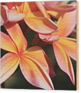 Pink Tropical Plumeria Makawao Maui Hawaii Wood Print