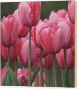 Pink Tuilips Wood Print