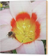 Pink Tulip Flower Orange Art Prints Honey Bee Baslee Troutman Wood Print