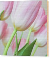 Pink Tulip Flowers Wood Print