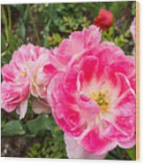 Pink Tulip, Keukenhof Wood Print