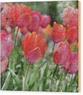 Pink Tulip Macro Wood Print