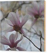 Pink Tulip Magnolias Wood Print