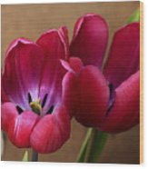 Pink Tulip Pair Wood Print