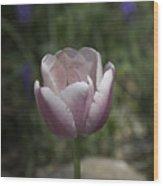 Pink Tulip Squared Wood Print
