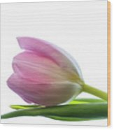 Pink Tulips 2 Wood Print