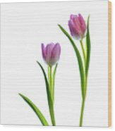 Pink Tulips 4 Wood Print