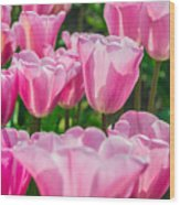 Pink Tulips Aglow Wood Print