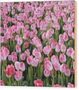 Pink Tulips- Photograph Wood Print