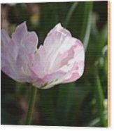Sun Kissed Flower Wood Print