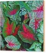 Pink Veined Wood Print