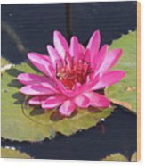 Pink Water Lilly Wood Print