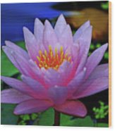 Pink Water Lily 007 Wood Print