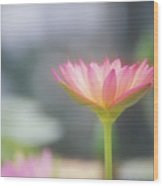 Pink Water Lily Wood Print
