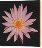 Pink Water Lily Transparent Wood Print