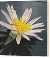Pink Water Lily With Dragonfly Wood Print