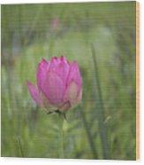 Pink Waterlily Bud Wood Print