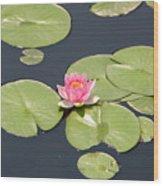 Pink Waterlily Wood Print