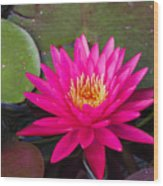 Pink Waterlily Garden Wood Print