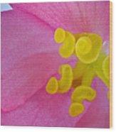 Pink Wax Begonia Wood Print
